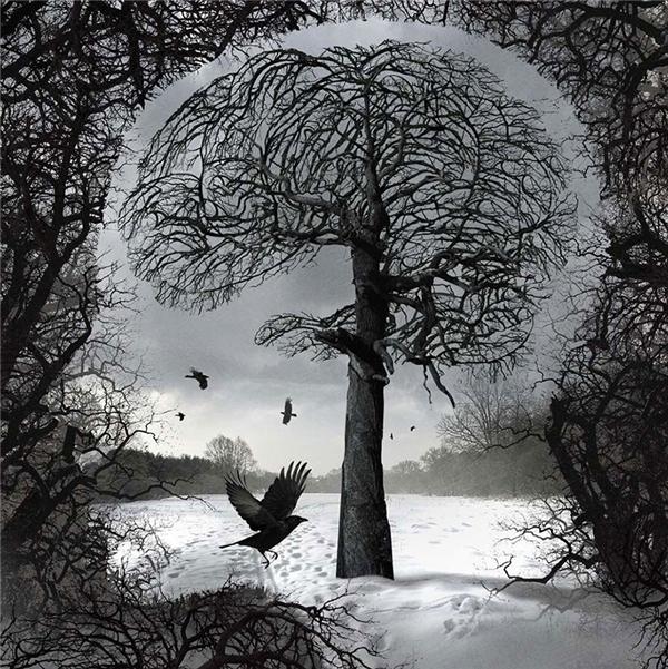 Có đôi lúc trong cuộc đời, trí não chúng ta chỉ là cái cây già cỗi, khô héo cố gắng gượng trong mùa đông tuyết trắng, không một chồi xanh, không một tia nắng. (Ảnh: Igor Morski)