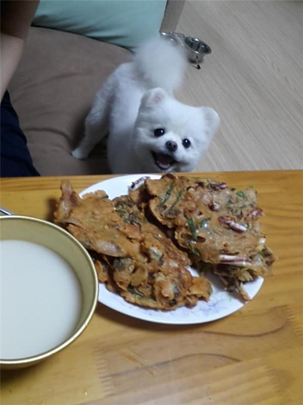 Mặt mày hớn hở khi thấy cô chủ có đồ ăn (Ảnh: Internet)