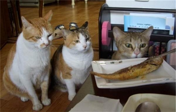 """Mèo cao: """"Sao mày không bảo nó biết làm bản mặt đó cũng vô ích?"""" Mèo mập: """"Nói rồi, đại ca, nhưng nó không nghe, cứ cho nó nếm mùi đời đi."""" (Ảnh: Internet)"""