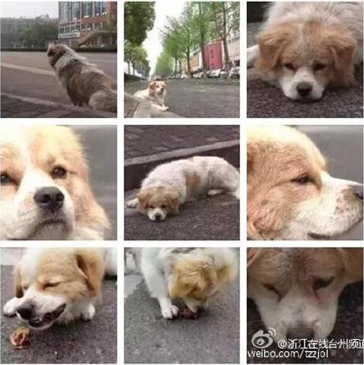 Hình ảnh chú chó Vương Tửđáng thươngchầu chực trên đường đợi chủ. (Ảnh: letu)