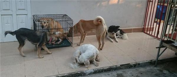 Số phận của những bé chó, mèo được gửi đến đây càng nghiệt ngã hơn khi phải kết thúc ở các lò mổ.(Ảnh: Internet)