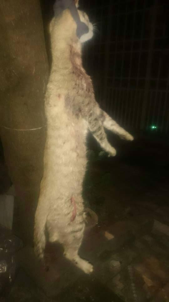 Chú mèo bị Vincent rạch da, cắt cổ rồi treo lên cây nhằm kêu gọi hỗ trợ của cộng đồng mạng.(Ảnh: Internet)