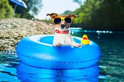 Thời tiết thế này thì chỉ có hồ bơi là số một! (Ảnh: Internet)