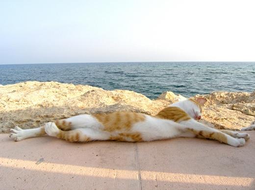 Thả mình trước biển xanh cũng không phải ý kiến tồi. (Ảnh: Internet)