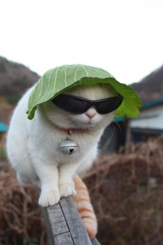 """Kính râm, """"mũ"""" từ lá là những phụ kiện bất li thân. (Ảnh: Internet)"""