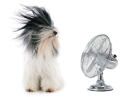 Muôn kiểu tránh nóng cực bá đạo của thú cưng