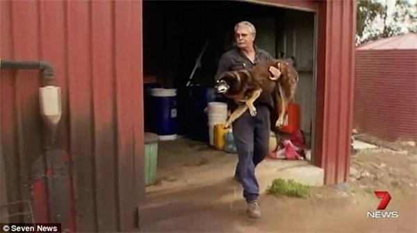 Maggie được chôn cất dưới một cây thông, cạnh một chú chó khác của ông McLaren. (Ảnh: Internet)