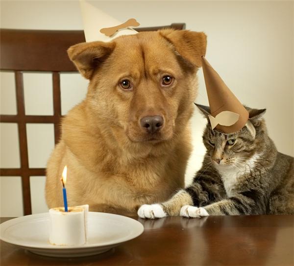 """""""Hứ, sinh nhật tôi mà cũng không thoát khỏi cái lão cún mặt già háp này là sao!""""(Ảnh: Internet)"""