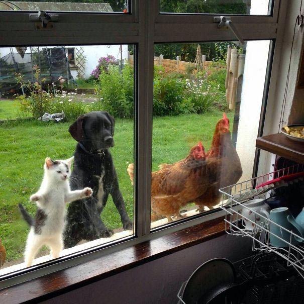Đã dòm vào nhà bếp thì chắc chắn chỉ là để chực ăn mà thôi. (Ảnh: imgur.com)