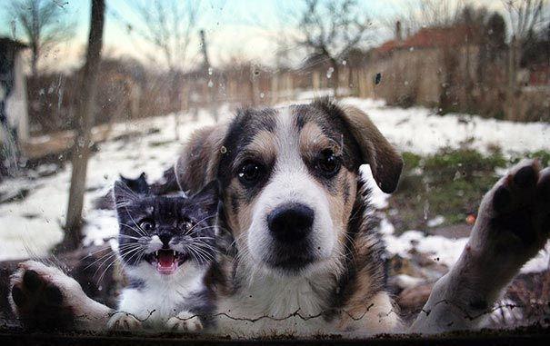 Việc của cún chỉ là dễ thương thôi, còn thương thuyết, dọa nạt gì để mèo lo. (Ảnh: liveinternet.ru)
