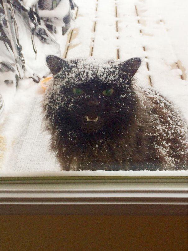 Ở ngoài trời tuyết lạnh thì làm sao hạnh phúc bằng lò sưởi ấm áp của chủ nhân, đúng không? Cho chừa nhé! (Ảnh: pinterest.com)