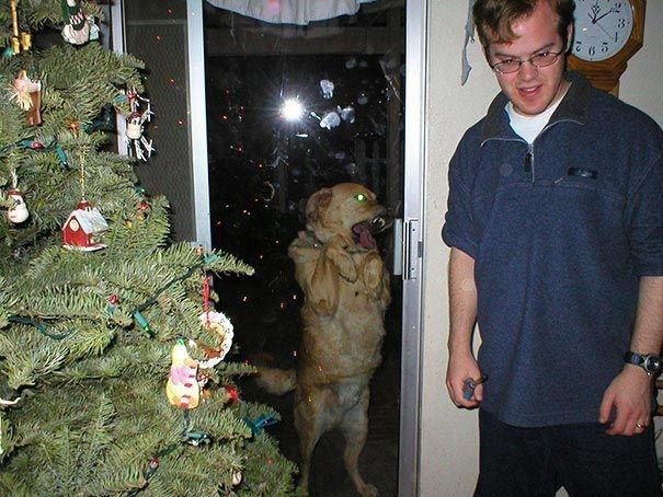 Hình như chú chó này... bị quỷ ám. (Ảnh: hoyestado.com)