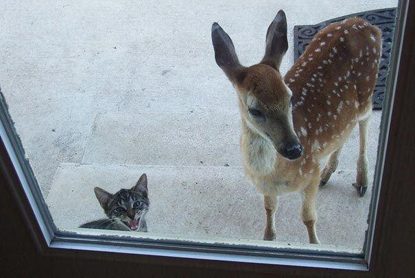 """""""Mẹ ơi, cho con nuôi con này được không?"""" (Ảnh: piximus.net)"""