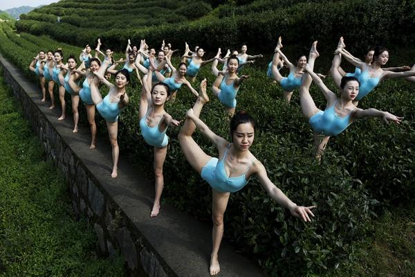 Theo Sina, những hình ảnh này được chụp tại một vườn chè tại Hàng Châu, Chiết Giang, Trung Quốc.