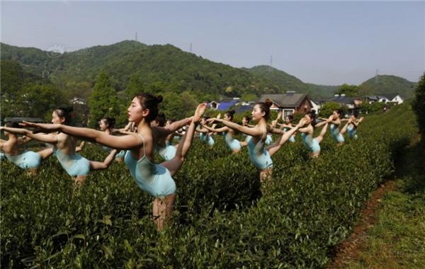 Sở dĩ là vì, địa điểm các cô gái trẻthực hiện những động tác múa này là tại vườn chè chứ không phải là sân khấu với những ánh đèn, điều này có chút ảnh hưởng đến văn hóa thưởng trà truyền thống của dân tộc.