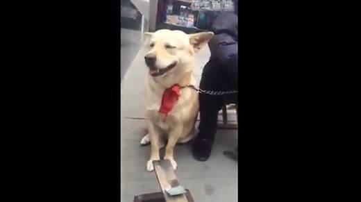Thích thú với chú chó biết làm toán bằng chân