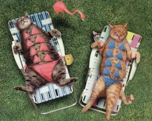 Bộ bikini tốn vải nhất quả đất.(Ảnh: Internet)