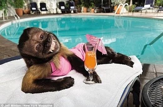 Tậu được bộ bikini chuẩn không cần chỉnh nên cười tươi rói luôn.(Ảnh: Internet)