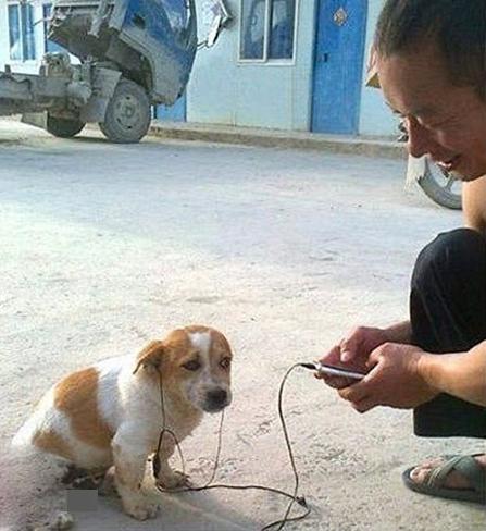 Chó cũng nghe nhạc bằng headphone đấy nhé.