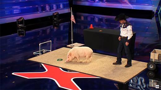 """Cận cảnh chú lợn thông minh được siêu mẫu thế giới... """"khóa môi"""""""