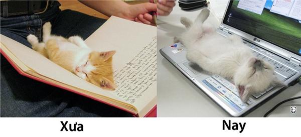 Nằm trên trang sách còn được cậu chủ âu yếm vuốt ve chứ lăn lộn trên bàn phím thế này toàn bị cậu ấy đuổi đi thôi.(Ảnh: Internet)