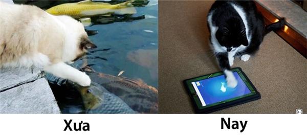 """Ngày xưa có thèm cá thì mèo ta còn nhảy xuống hồ """"thịt"""" vài chú. Ngày nay, than ôi mèo ta chỉ biết """"lờ"""" đi cơn đói bằng trò chơi bắt cákhông thể chán hơn trên Ipad. (Ảnh: Internet)"""