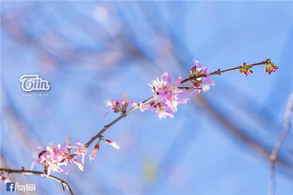 Loài cây trơ trọi không một cành lá, nhưng ẩn chưa sức sống mãnh liệt.