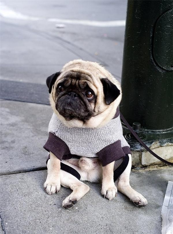Đời của chó có gì vui đâu!(Ảnh: Internet)