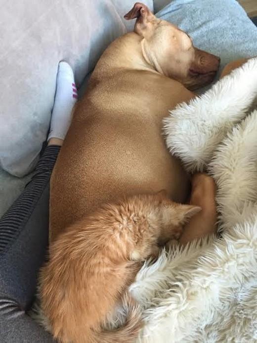 Rue thoải mái, ngoan ngoãn nằm ngủ ngon trên mình anh trai. (Ảnh: Internet)