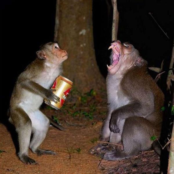 AAA, sao anh lại uống hết bia của tôi chứ.
