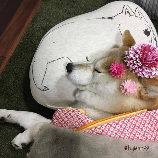 Ai-chan đẹp rạng rời trong ngày lễ trưởng thành của mình. (Ảnh: fujisan99)