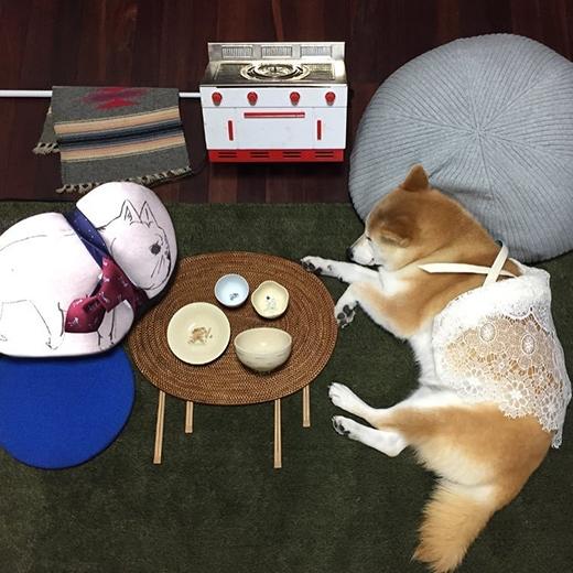 Đang rất thoải mái uống trà đàm đạo với gối ôm thân thiết. (Ảnh: fujisan99)