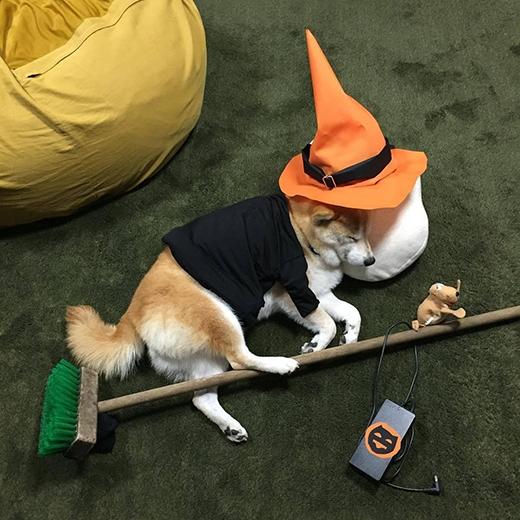 Đến Halloween thì lại tranh thủ cưỡi chổi đi chơi. (Ảnh: fujisan99)