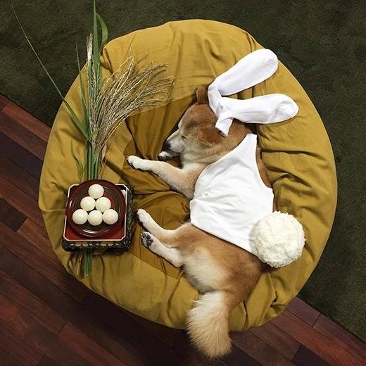 Em là Thỏ Ngọc trên cung trăng, thích ăn mochi. (Ảnh: fujisan99)