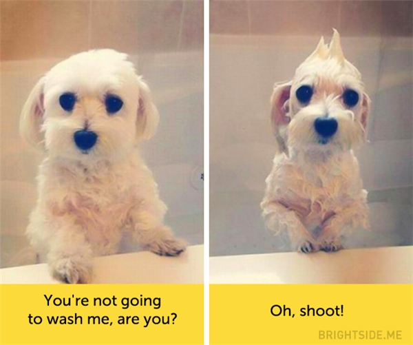 Con chỉ đứng đây chơi thôi chứ không phải tắm đúng không?... Thôi rồi đời! (Ảnh: konwalia)