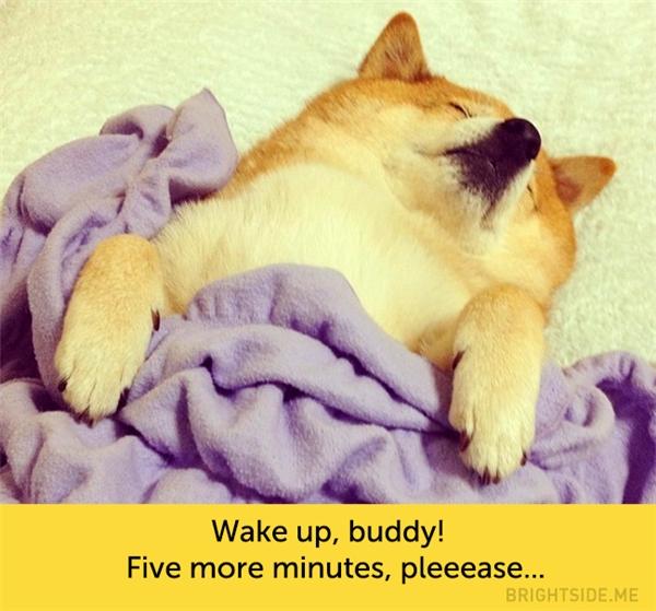 Không đi học đâu, ngủ thêm 5 phút nữa thôi mà... (Ảnh: kuaiji.com)