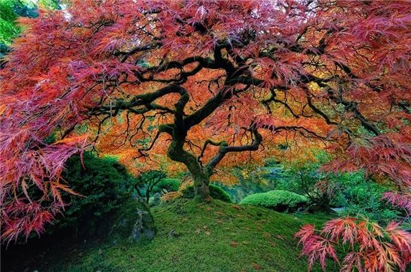 Sửng sốt chiêm ngưỡng 16 cây đẹp nhất thế giới