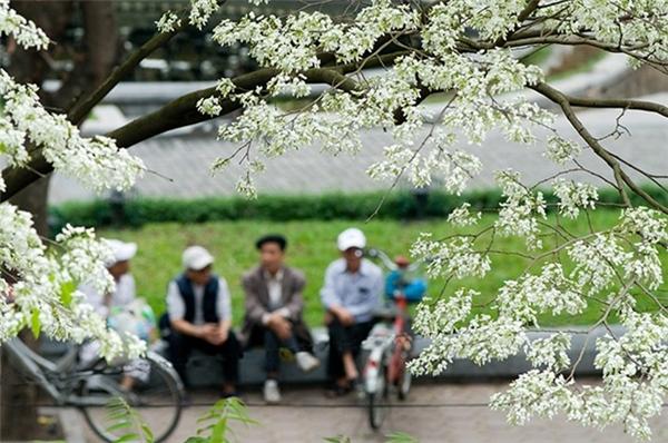 Hà Nội đẹp dịu dàng với những mùa hoa