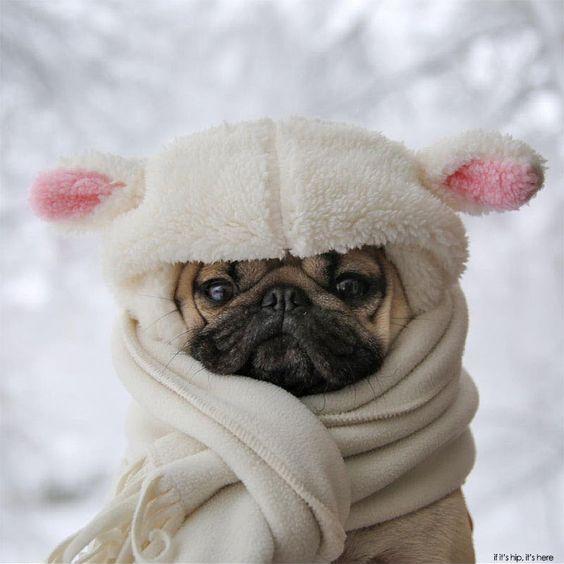 Bộ tưởng chó là không biết lạnh, không biết mùa đông là gì à?(Ảnh: Internet)