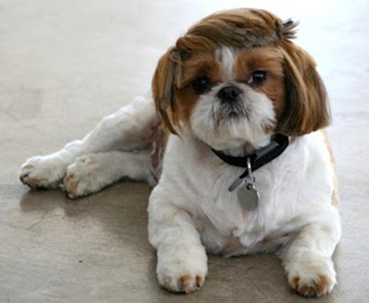 Nghe đồn tóc ngắn đang là mốt?! (Ảnh: Internet)