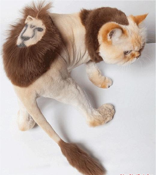 Muốn thành sư tử nào có khó khăn gì. (Ảnh: Internet)