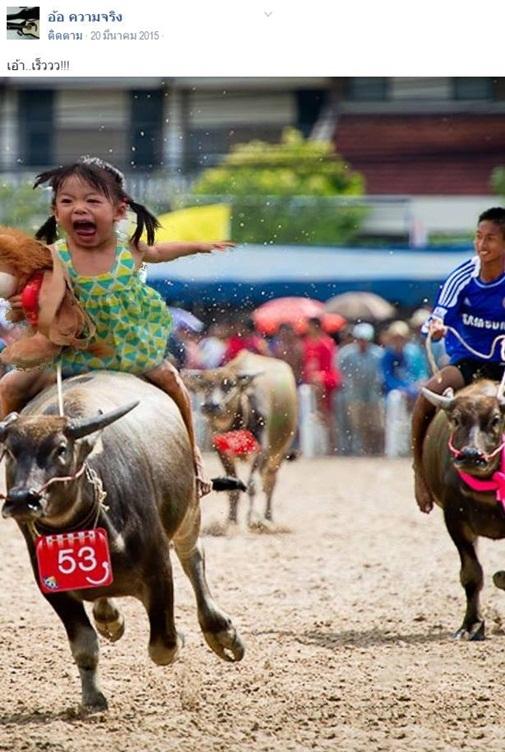 Bé gái tham gia lễ hội đua trâu.