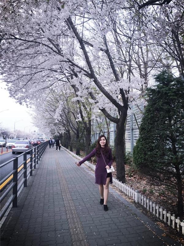Hoa anh đào dọc đường đến công viênYeouido, Seoul, Hàn Quốc. (Ảnh: Diệu Bình)