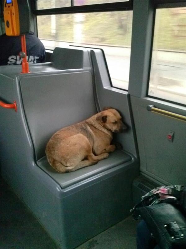 Truyền thuyết về biệt đội chó