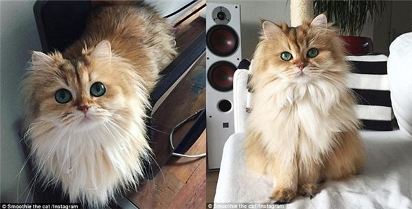 Gặp gỡ bé mèo được mệnh danh