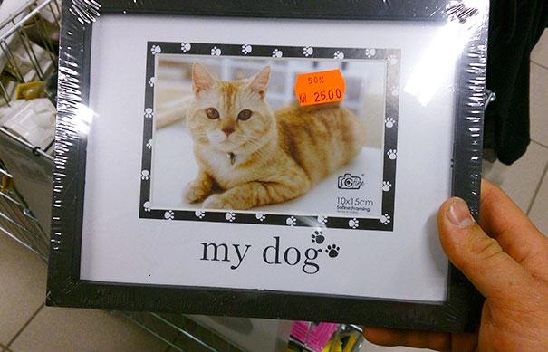 Chú mèo nghĩ mình là... chó?! (Ảnh: retailhellunderground)