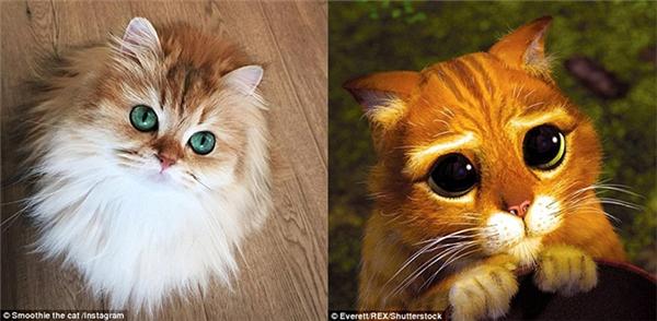 """Smoothie có thể không biểu cảm bằng nhưng về độ đẹp thì """"ăn đứt"""" Mèo Đi Hia rồi nhé. (Ảnh: Internet)"""