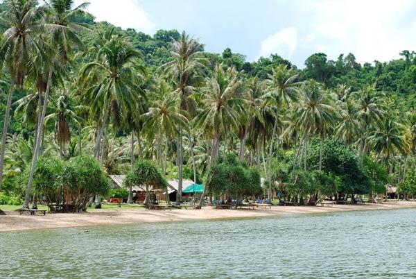 Vẻ đẹp của Đảo Dừa.(Ảnh: Internet)
