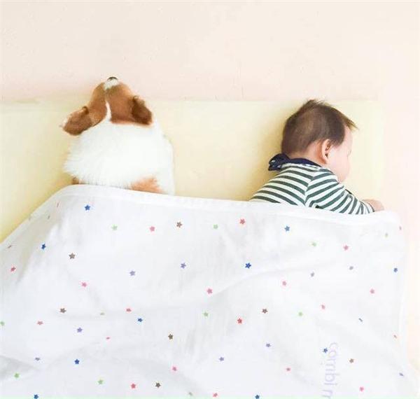 Có thể thấy tình bạn mới giữa cậu chủ nhỏ và chú chó đã nảy nở và nhanh chóng trở nên thân thiết. (Ảnh: Internet)