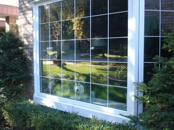 Chú còn có thói quen ngồi bên cửa sổ lặng ngắm thế giới bên ngoài và suy ngẫm về cuộc đời.